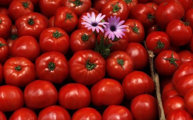 tomates-735x459.jpg
