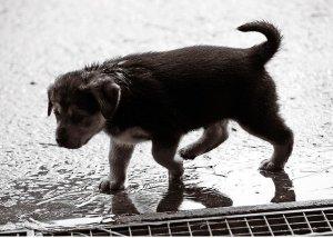 dias de lluvia 2 perros