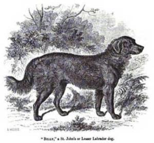 hisotria labrador