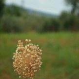 countryside 7
