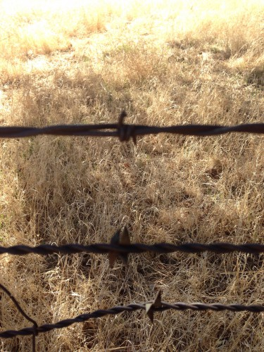 Long before this was my 4-H/FFA place, this a part of the history of the Ranch. Just look at the barbed wire left over in my pen. The bottom wire is super old!