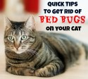 Quick Tips To Get Rid Of Bed Bugs On Your Cat