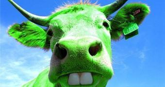 Sobre Vacas Transgênicas e Antas Naturais