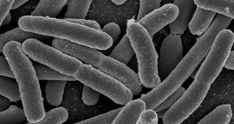 Bactéria E. coli pode ser utilizada para produzir gasolina