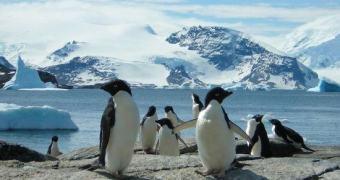 Curso introdutório da Linux Foundation será disponibilizado online gratuitamente