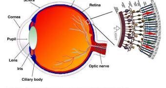 Descolamento de retina associado à digitar por muito tempo no celular