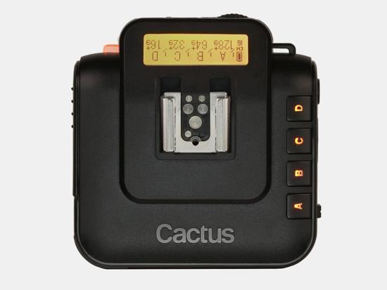 cactus_V6