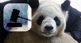 Sala da Justiça #34 — Pandas diferenciados, amigos e videogames, foguete movido à álcool e o vazamento das fotos