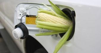 Não tá fácil pra ninguém, EUA investindo em tecnologia para transformar restos de milho em combustível