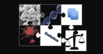 Genes duplicados no genoma são finalmente explicados