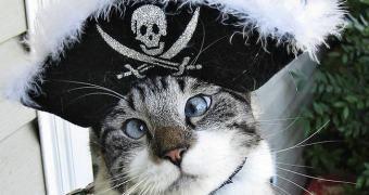 Gatos Pirateando Música, ou algo assim.