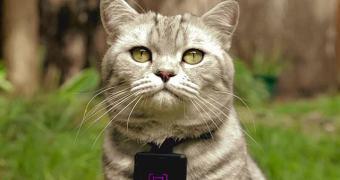 Catstacam — acompanhe a vida de seu gato no Instagram