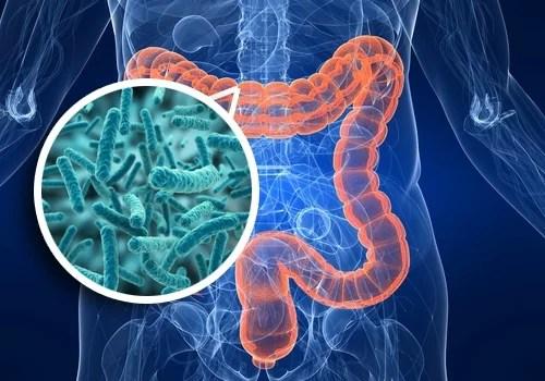 Resultat d'imatges de flora intestinal