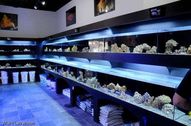 DFW Marine Aquarium Society ? View topic   High Class fish store