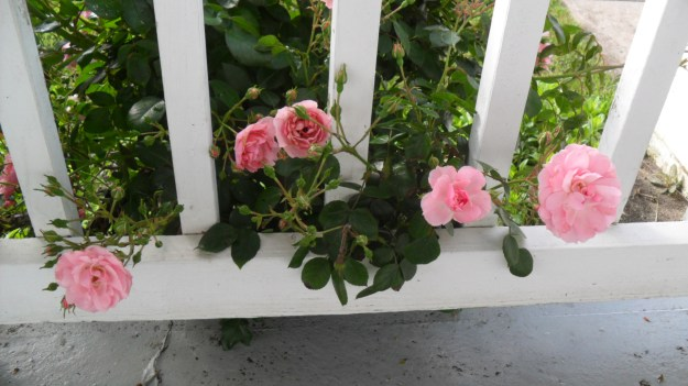 Row of pink flowers on porch