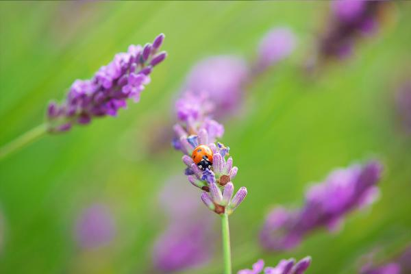flowers_insects_20