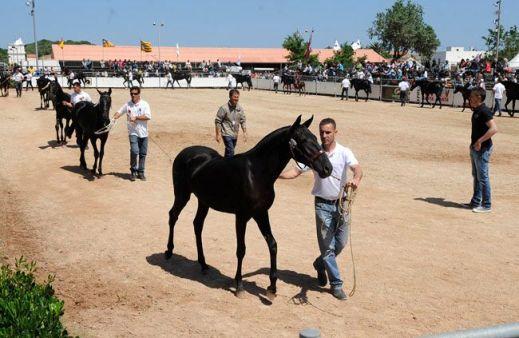 """""""Un evento como la Fira de Cavalls repercute en el municipio de forma muy positiva"""""""