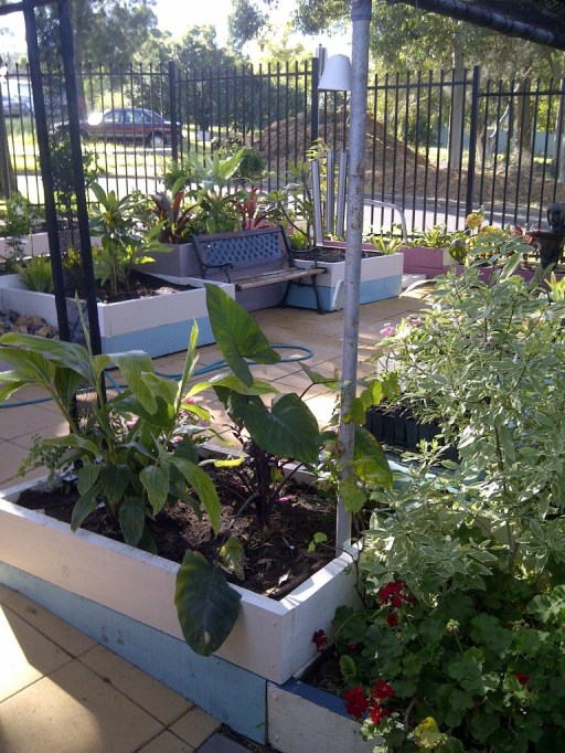 Top Garden Area, more new plants in our community garden.