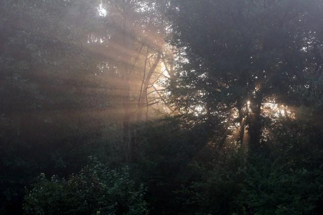 Premiers rayons, la forêt