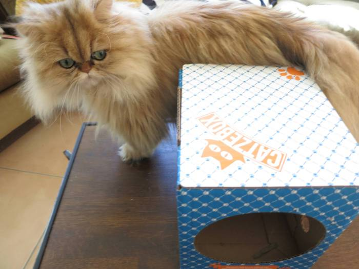 Catzebox Cat Toy Review