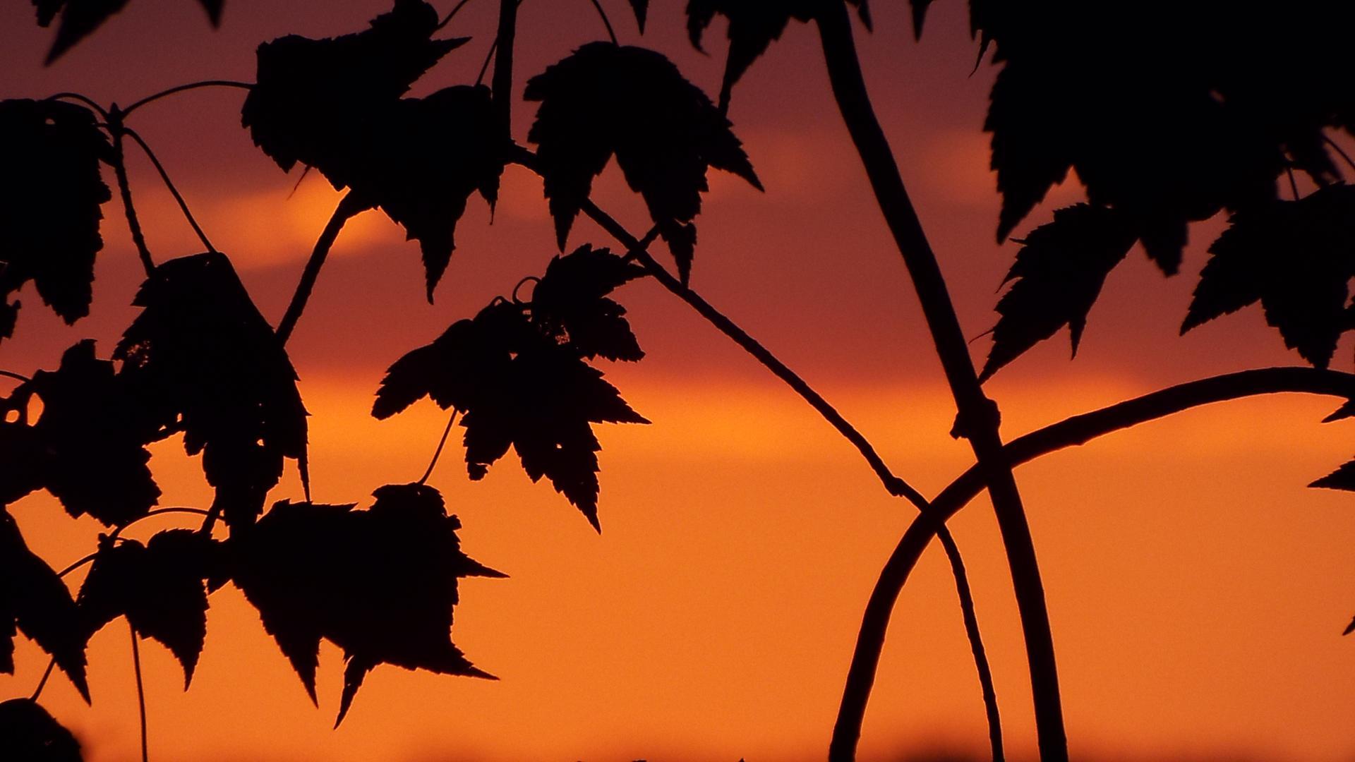 Lisa leaf gallery image