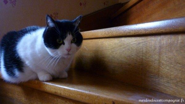 Un chat, ça ne se plaint pas