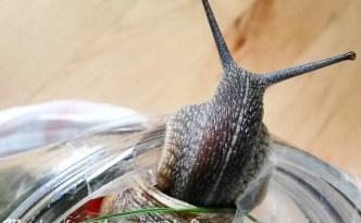 abidi escargot