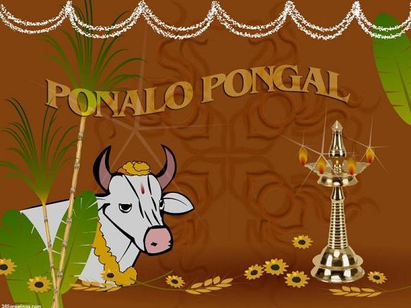 happy-pongal-wishes