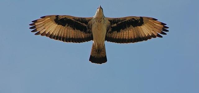 Los Elevare sobre las alas de un águila