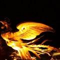 phoenix-651943_960_720