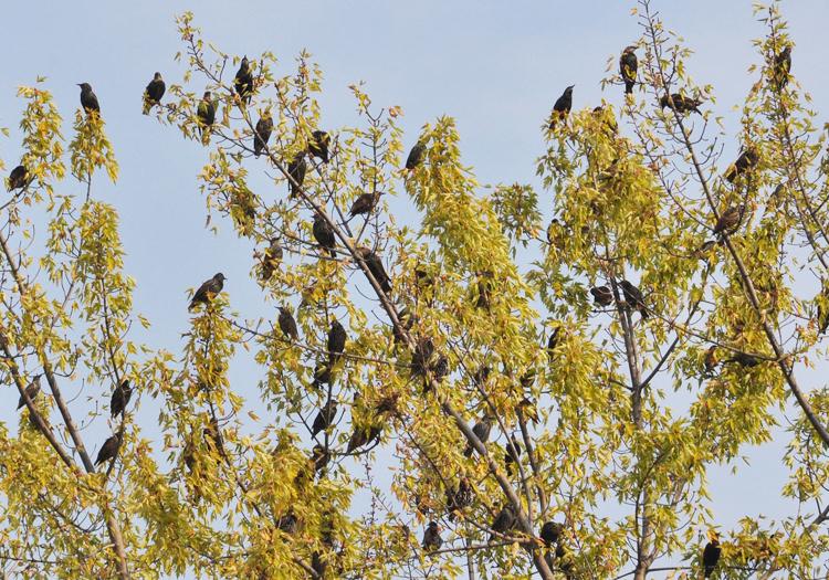 community-birdstrees