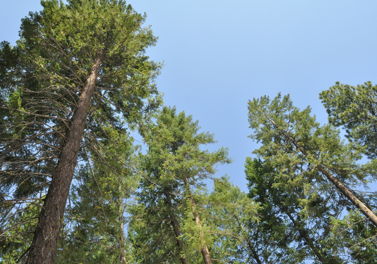 news-forest