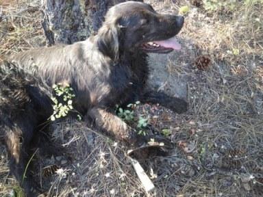 Carolyn Schmekel's dog suffered a bruised leg. Photo courtesy of Andy Floyd