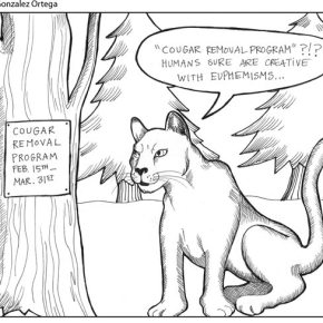 Cougar removal