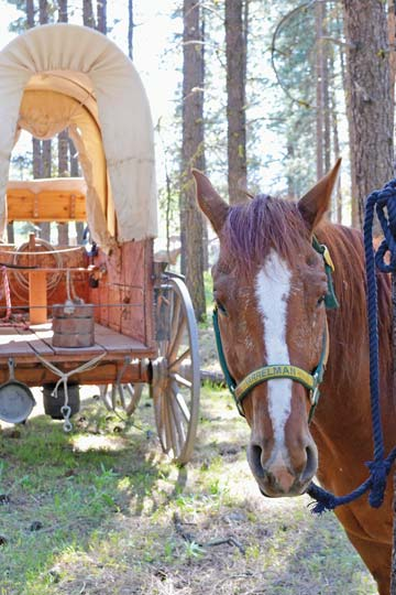 Local outfitters will bring their rigs and rides on the Ride to Rendezvous.File photo by Laurelle Walsh