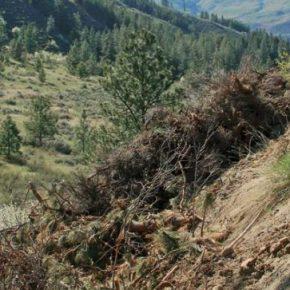 Debris dumped along Texas Creek prompts talks between agencies