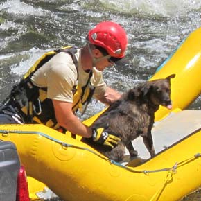 Photo gallery of rescue operation for dog trapped in truck that rolled into Chewuch River in Winthrop