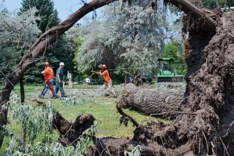 Viewed through the roots of a fallen willow, state parks arbor crew members James Gouldin and Ryan Smart and Park Manager Rick Lewis prepare to fell another tree at Pearrygin Lake State Park on Monday. Photo by Laurelle Walsh