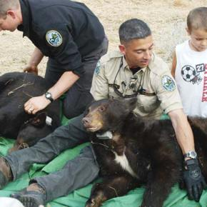 Cinder still in her den, but bear buddy shot by hunter