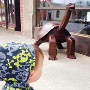 Glover Street tortoise surprises, attracts, invites touch