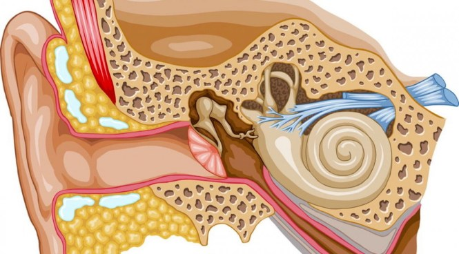 While noise is a known cause of tinnitus, in many cases the cause is not known 1