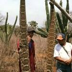 serpiente gigante san aciro de acosta
