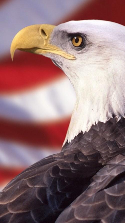 Medium Of Bald Eagle Wallpaper