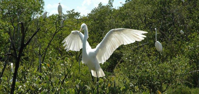 birds_ll01