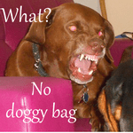 Feature image doggy bag 150