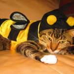 Las mascotas se disfrazan de abeja