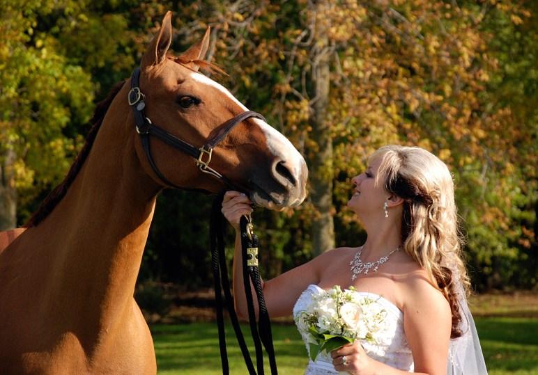 W-wedding-horse