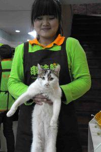 Wang Cai DSC_9148