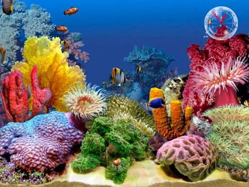 Fish, Algae Eaters, Fish Tanks, Aquarium Repair, Aquarium Cleaning