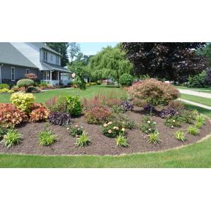 Enamour Landscaped Backyards S Variegated Miniature Roses A Landscape Landscaping Ideas Goshiki Shidare Japanese Maple S Small Yards Landscaped